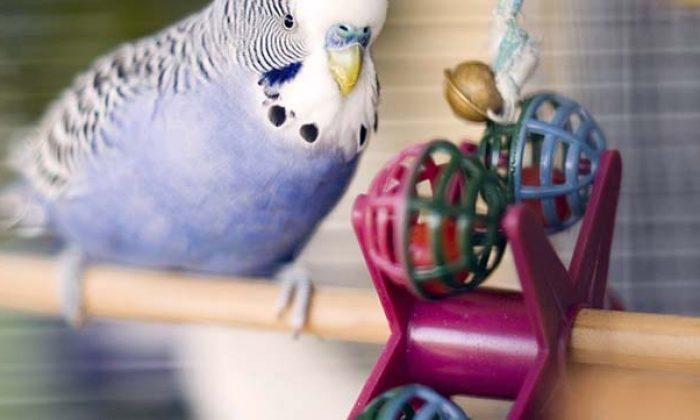 Evimizde kuş beslemek sağlığımıza zarar verebilir mi?