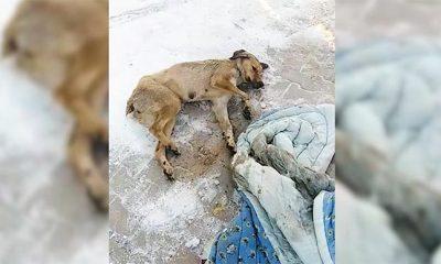 Gölbaşı Belediyesi ekipleri donmak üzere olan bir köpeği kurtardılar