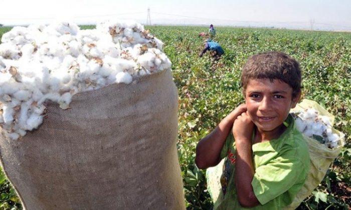 Mevsimlik tarımda çocuk işçiliği konusu büyüteç altında