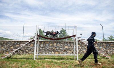 Terörle Mücadelede Jandarmanın En Büyük Desteği 'Hassas Burunlar'